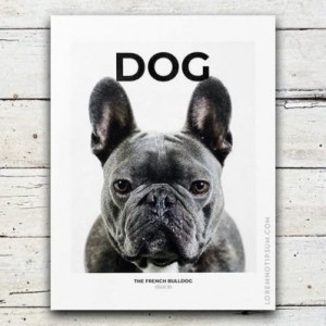 loremnotipsum_dog-magazine_issue5_cover-600x398