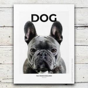 loremnotipsum_dog-magazine_issue5_cover-600x398